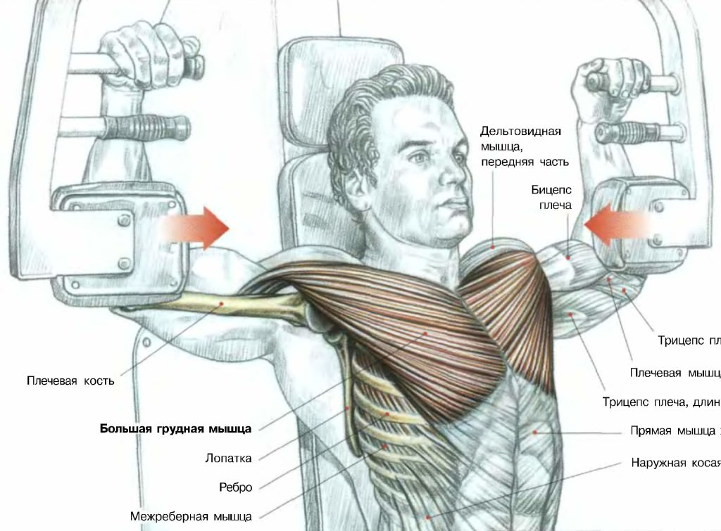 Схема прокачки мышц в хаммере