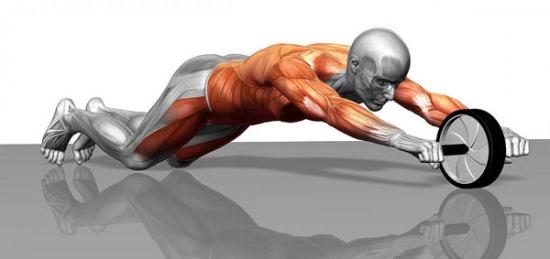 Схема задействования мышц при помощи ролика для пресса