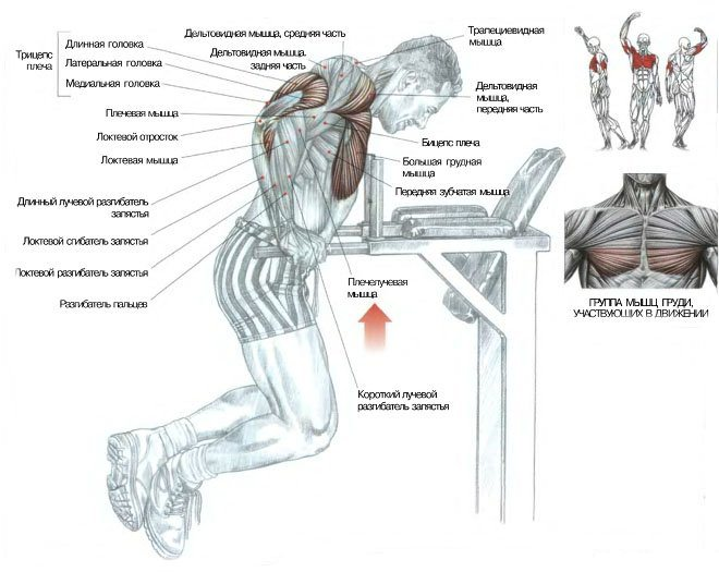группа мышц, участвующих в движении