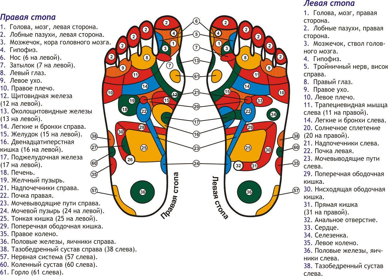 Биологически активные точки на стопах ног схема