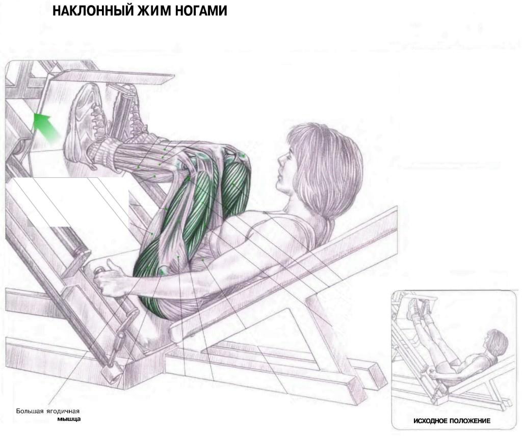 Мышцы задействованные при жиме лежа