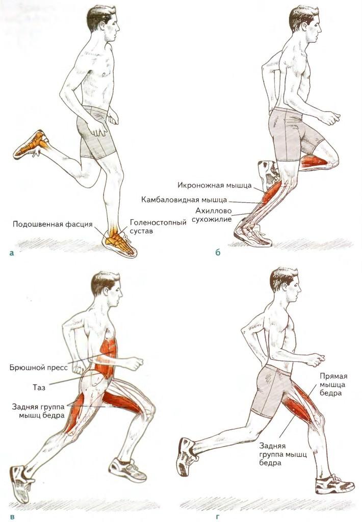 Схема работы мышц при беге