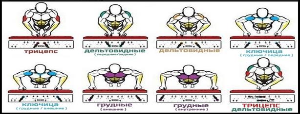 Схема работы мышц при отжиманиях