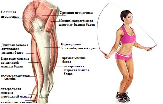 мышцы, работающие при занятиях на скакалке